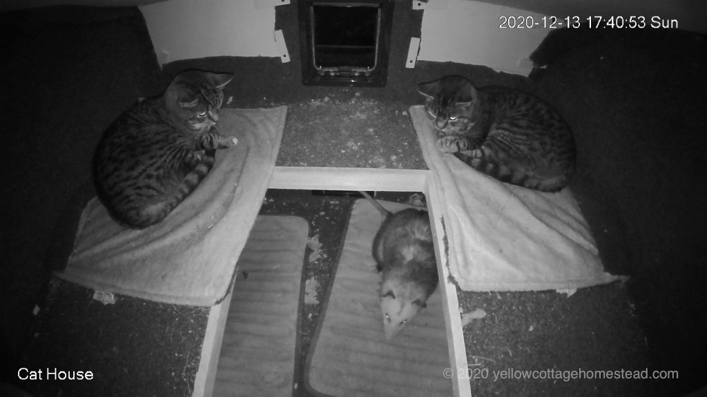 Cats and possum