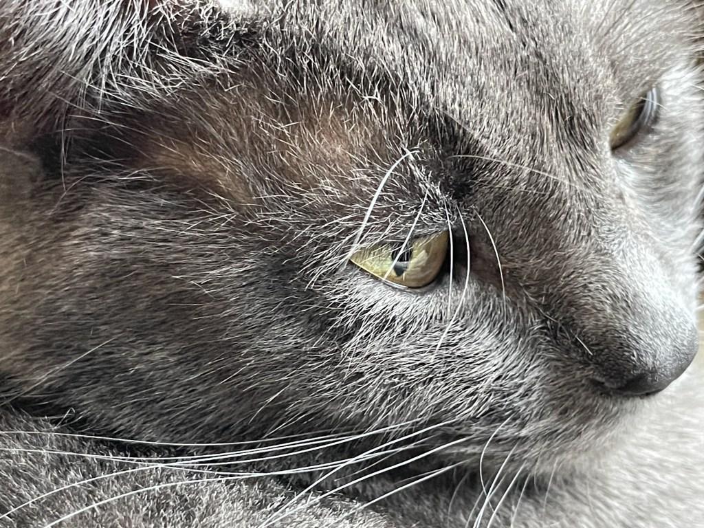 Paladin closeup