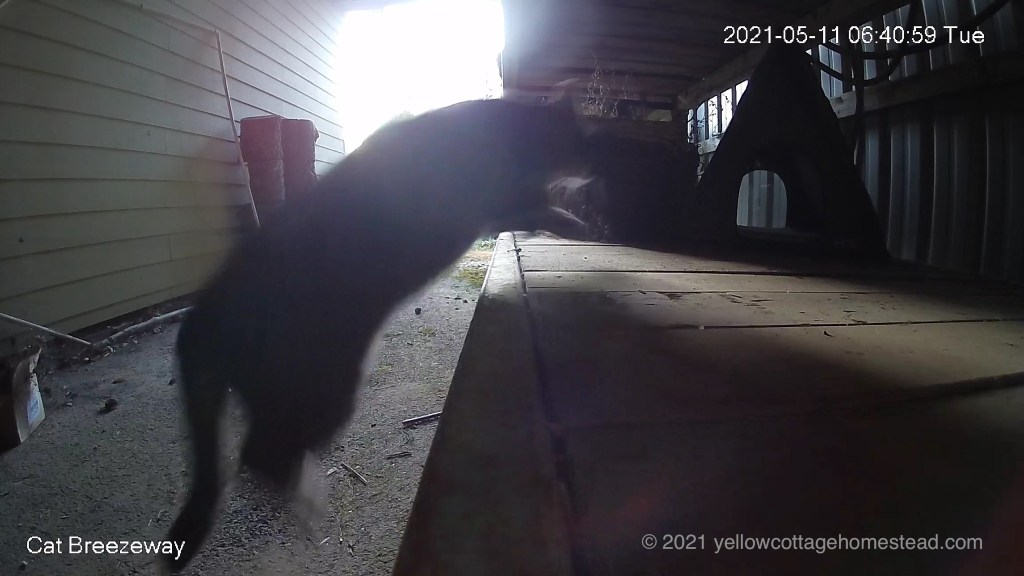 Spud jumping up to his cabin