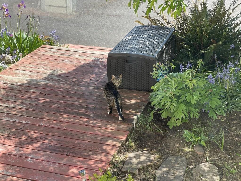 Porcini on front steps