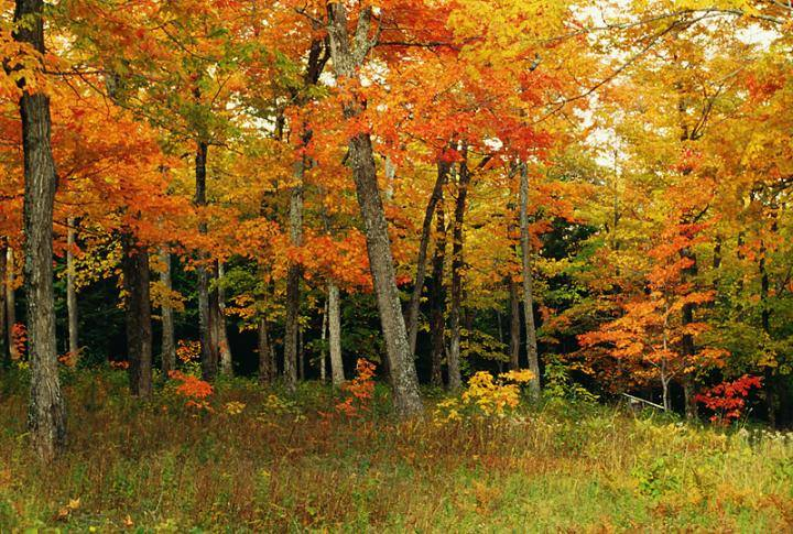 Welcome to October - the Colorful Start of Fall