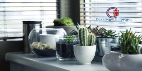 7 plantas que limpam o ar da casa indicadas para ambientes fechados
