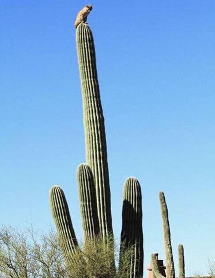 pierderea în greutate cactus)