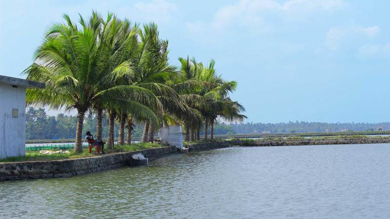 North Paravur - Muziris Heritage Site_Backwater & Coconut trees
