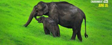 Elephant Calf and Mother - Munnar Ecopoint, World Environment Day