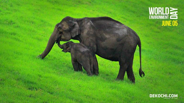 Elephant Calf and Mother - Munnar Ecopoint