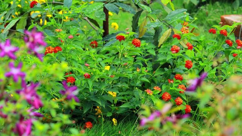 Folklore-Cultural-Theatre-Fort-Kochi-Garden