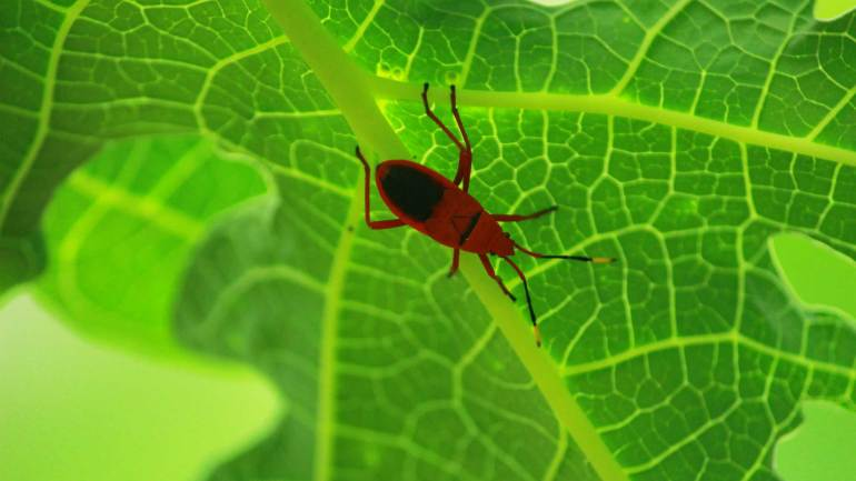 Red nad Black-Beetle-Insects-of-Kerala