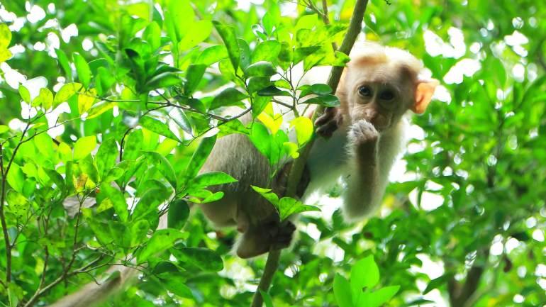 Infant Monkey on the tree at Thattekkad Bird Sanctury Kothamangalam Tourist Places
