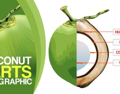 Coconut-Coconut Parts-Coconut Husk-Coconut-Shell-Coconut-Milk-Coconut-Water-Coconut-Info graphic
