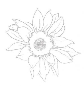 Sonnenblume zeichnen  Anleitung  Blumen zeichnen lernen