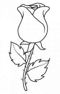 Schne Rose einfach malen  DekoKing