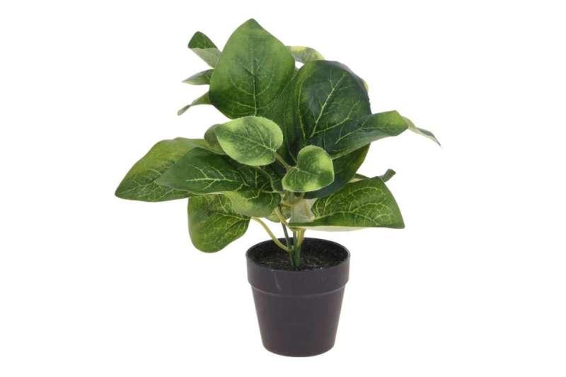 Kwiat w doniczce BLUMISI zielony/czarny
