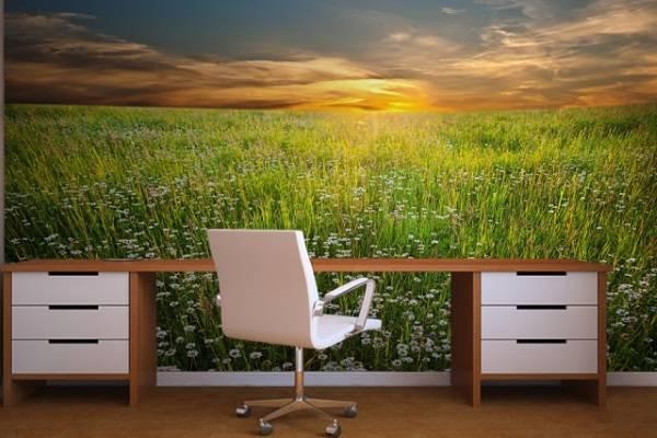fotooboi-v-ofise-doma