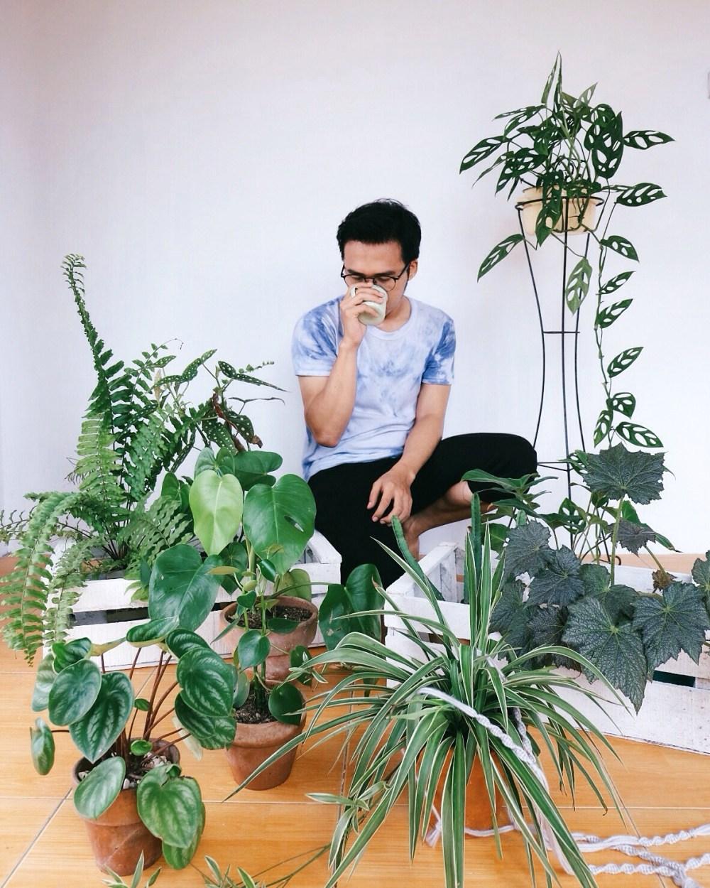 Apa Bedanya Kaktus dan Sukulen  Plus Cara Perawatan dan Tips Untuk ... a8c73121a0