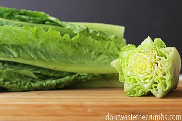 cara menanam sayur 2.jpg