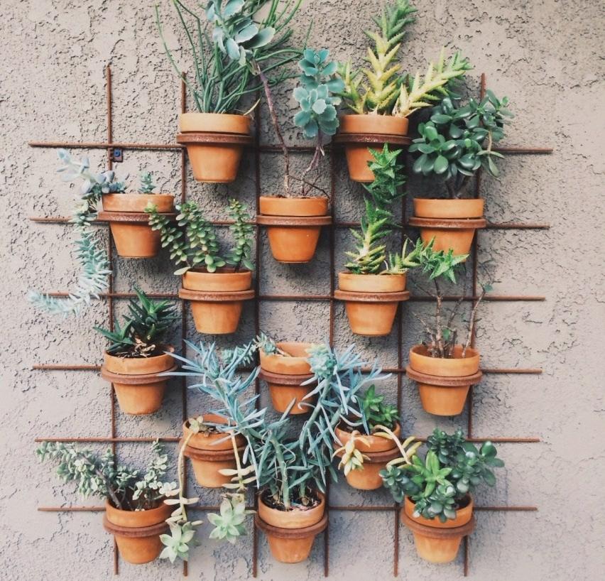 Taman Rumah Mini Living Wall