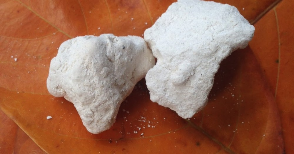 cara membasmi rayap kapur sirih