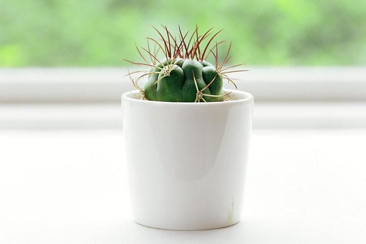 Letakkan pot tanaman kecil sebagai aksesoris rumah
