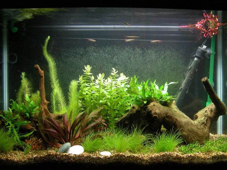 Hiasan Aquarium Plastik