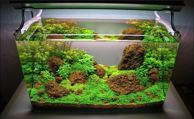 7 ide hiasan aquarium yang nggak menguras dompet rh dekoruma com