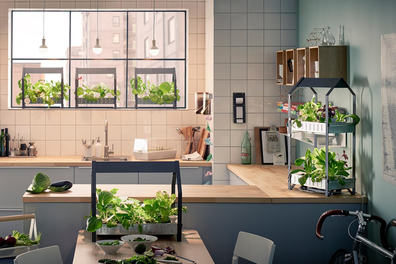 Ingin Punya Taman Minimalis Di Dalam Rumah Ini 9 Hal Yang