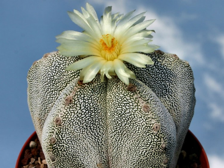 14 Jenis Kaktus Mini yang Harus Dipunya Pecinta Tanaman