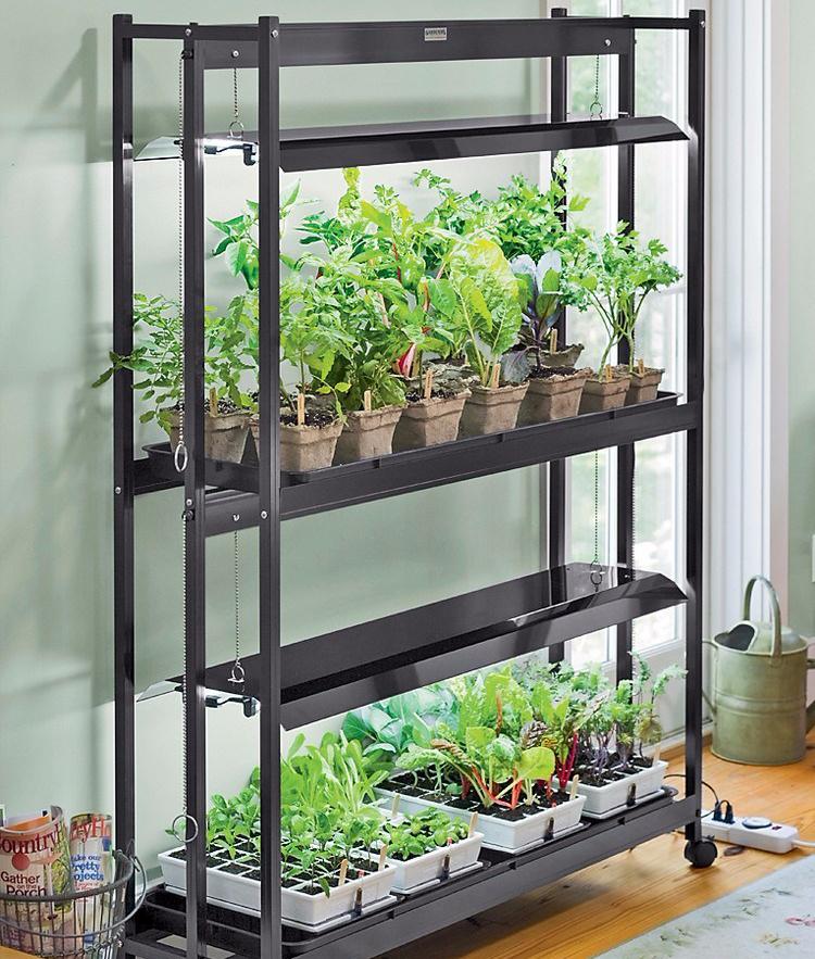 Kebun Rak Sayur Indoor