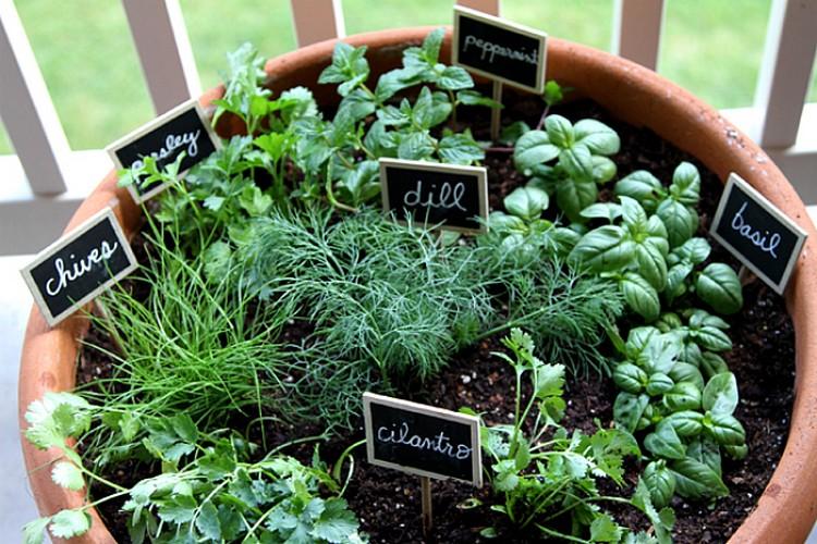 10 Spot di Rumah untuk Taman Sayuranmu