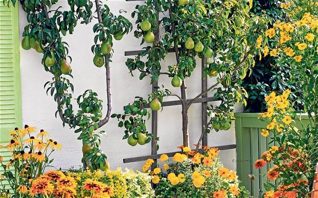 Mau Punya Kebun Buah di Lahan Sempit? Ini Trik Rahasianya!