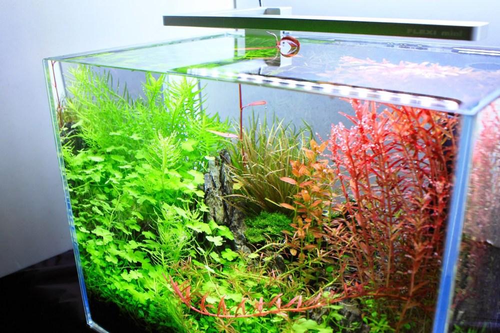 Alat Penunjang Akuarium Ikan