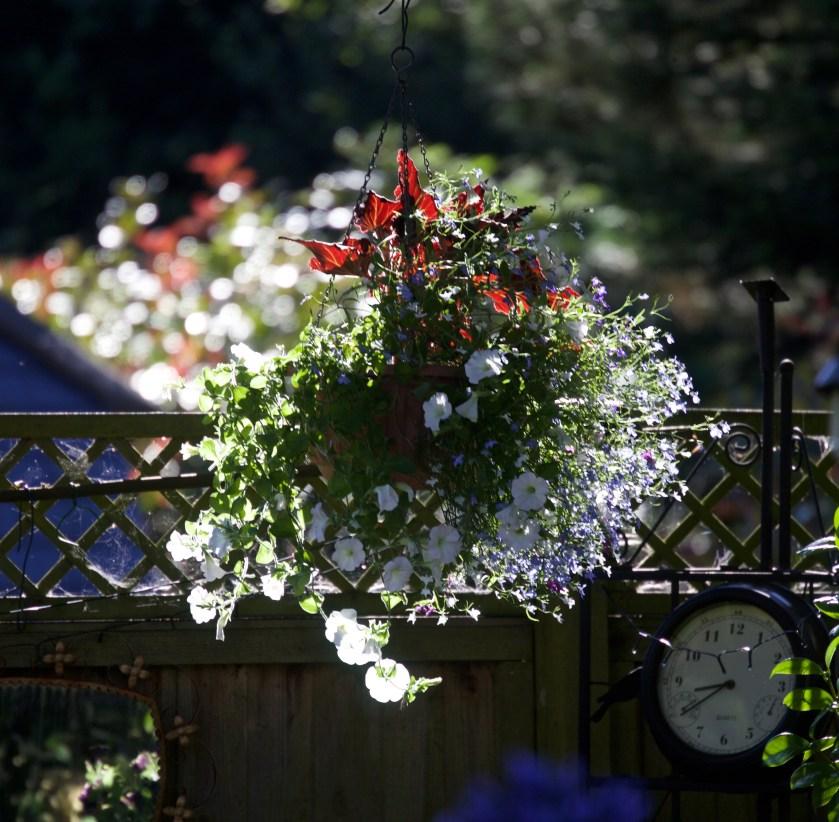 Jenis Tanaman Hias Gantung Bunga Lobelia