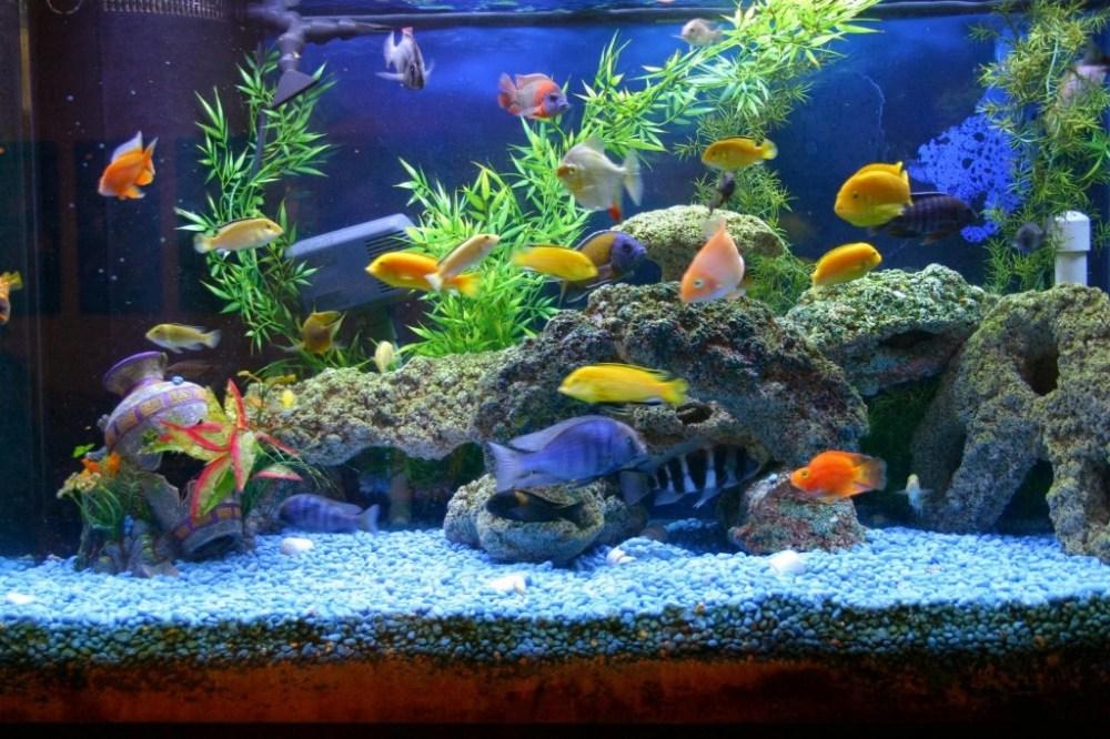 Ini Caranya Menyiapkan Akuarium Ikan Idaman Untuk Pemula