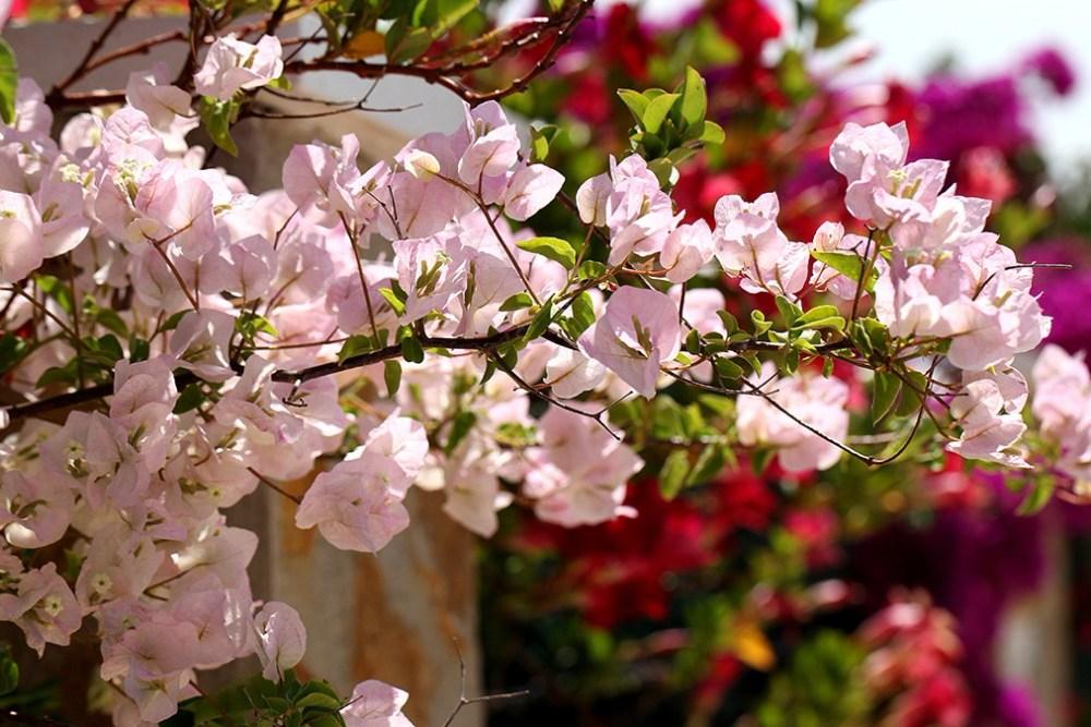 Unduh 66 Gambar Bunga Kertas Warna Warni Paling Cantik