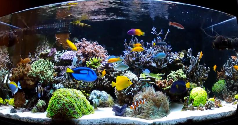 Akuarium Air Laut Ikan