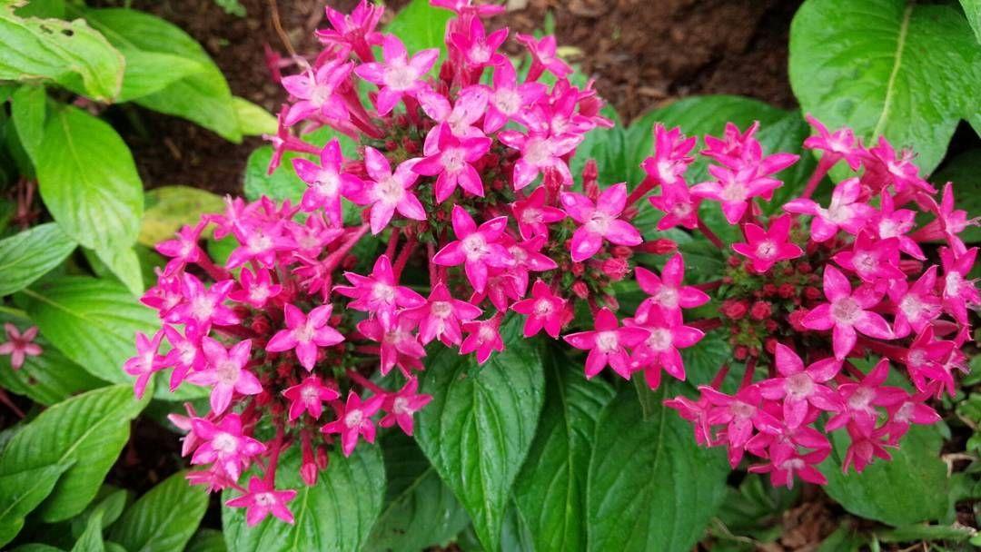 Download 830 Gambar Bunga Yg Bagus Dan Cantik HD Gratid