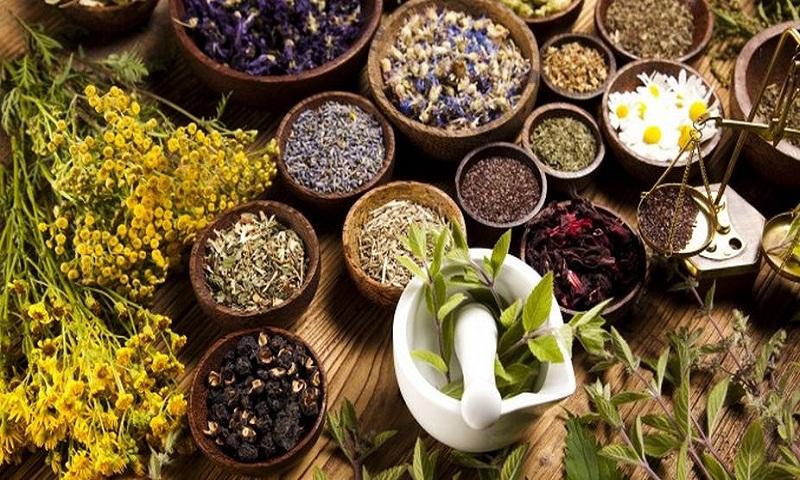 tanaman obat di Indonesia