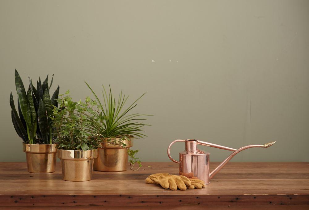 Pot tanaman herbal bisa menjadi pengharum ruangan alami