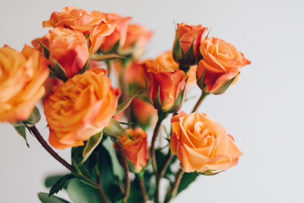 Bunga Hias Mawar