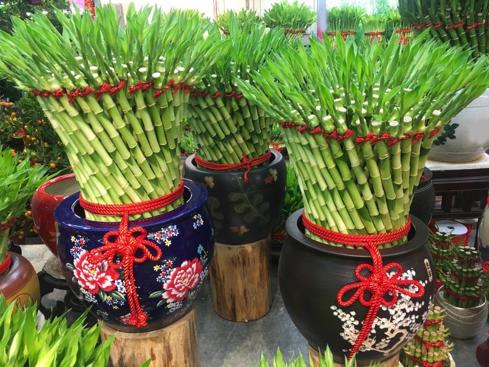 Merawat Bambu Rejeki