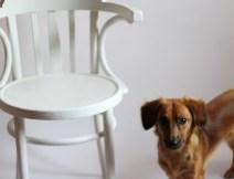 Białe krzesło do sesji zdjęciowej, farba kredowa