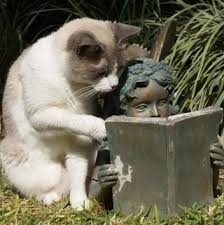 leyendo gato