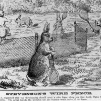 Decretos-leyes autonómicos a la caza de los conejos