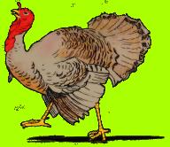 turkey-clip-art-realistic