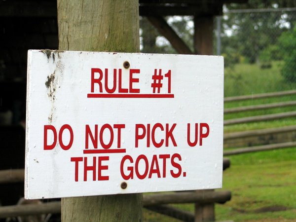 rule-1-do-not-pick-up-the-goats
