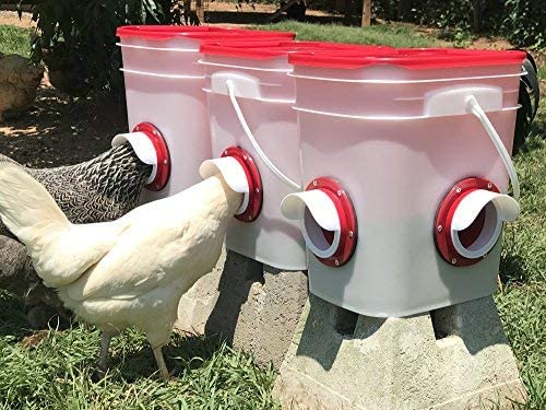 Chicken Feeder-Holds 20 Pounds-Pellets-Crumbles-Grain in Bucket - for 21st Century Chicken Owners - Inside or Outside of Coop - Use with Nipple Waterer (2 Feed Ports - Corner (4-6 Hens))