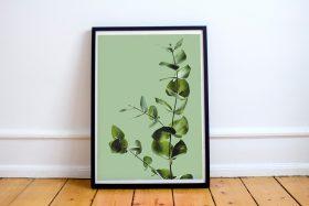 Poster eucalyptus plant groene achtergrond