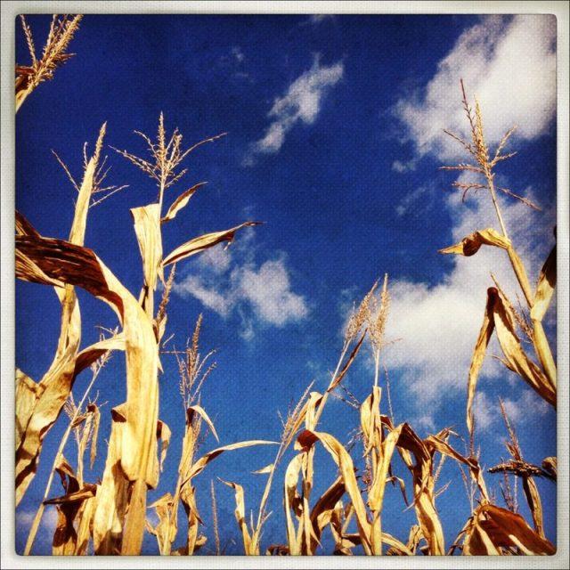 corn_sky