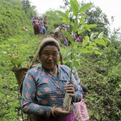 Nepal_2018_Nawalparasi_Nursery director Bhima Sharu leading the plantation activities