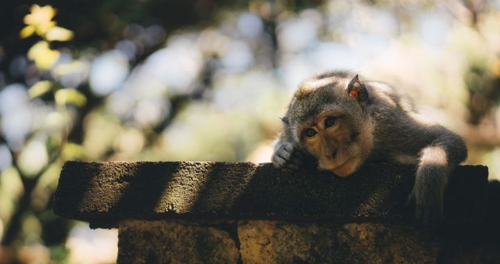 Monkey Brain Monday